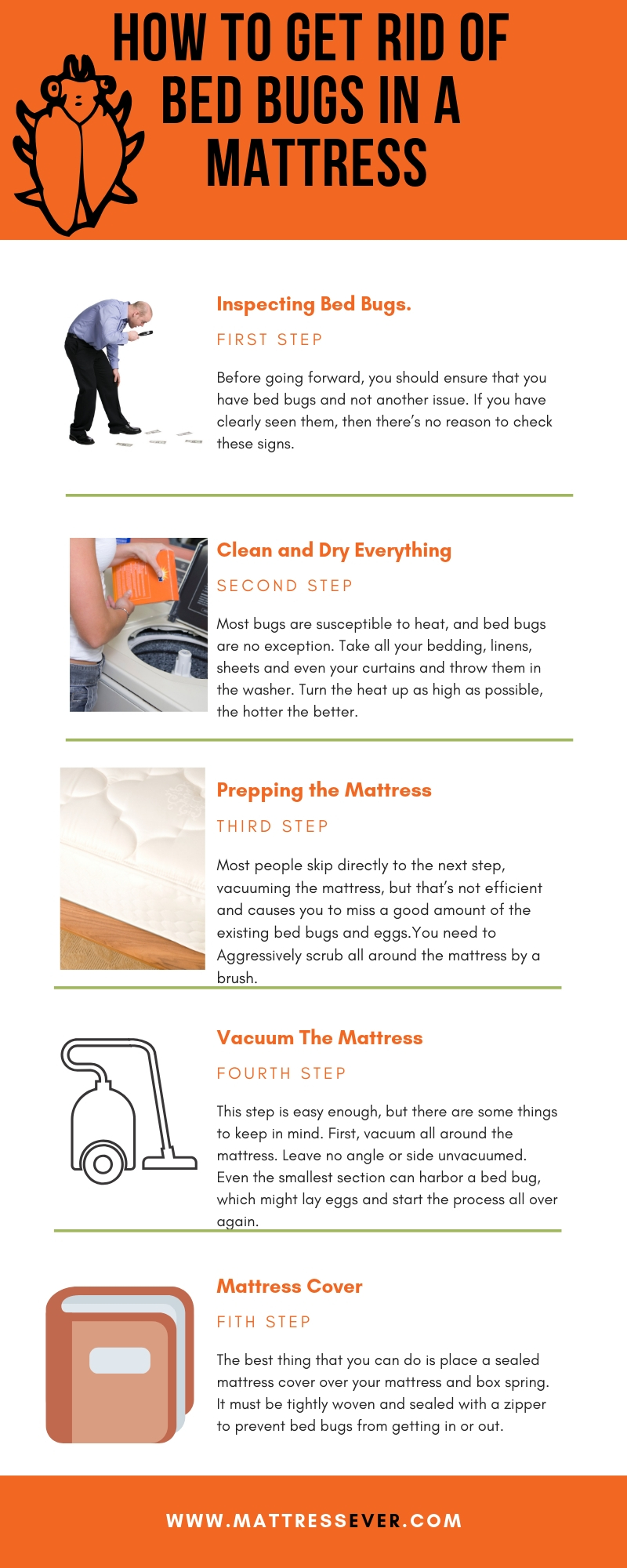 How to Get Rid of Bed Bugs in a Mattress Info graphics
