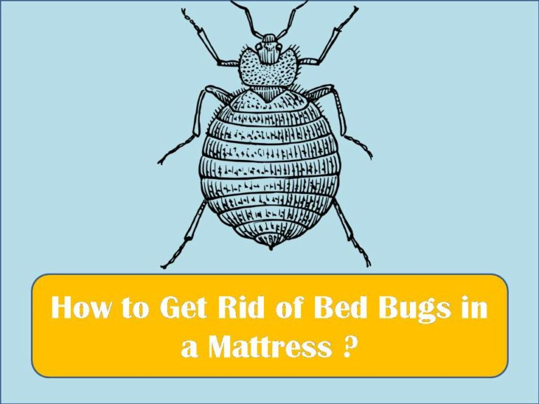 How to Get Rid of Bed Bugs in a Mattress