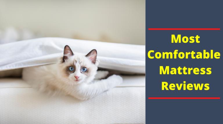 most comfortable mattress reviews